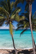 Cuba, Matanzas Province, Varadero, Varadero Beach palms