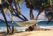 Hammock tied between trees, North Shore beach, St Croix, US Virgin Islands