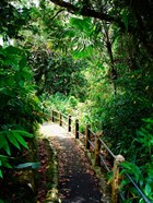 Puerto Rico, Luquillo, El Yunque National Forest path