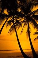 Sunset and Palms, San Juan, Puerto Rico