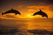 Silhoutte of Bottlenose Dolphins, Caribbean
