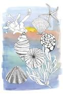 Sea Shell II