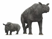 An adult Paraceratherium compared to a modern adult White Rhinoceros