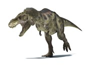 3D Rendering of a Tyrannosaurus Rex Dinosaur