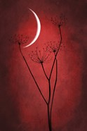 Red Crescent Moon