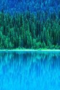Emerald Lake Boathouse, Yoho National Park, British Columbia, Canada (vertical)