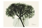 Verduous Hydrangea 1
