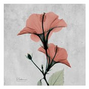 Hibiscus Marsala