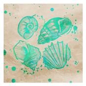 Splat Shells on Sand II