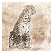 African Animals - Leopard