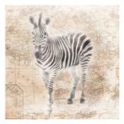 African Animals - Zebra