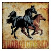 Thoroughbred 01