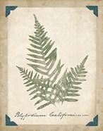 Vintage Ferns XI