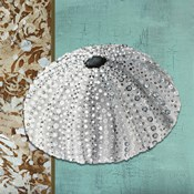 Silver Sea Urchin - Tan Side Border Teal Crackle Back