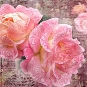 Fresh Rose III