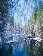 Winter trees along Merced River, Yosemite Valley, Yosemite National Park, California