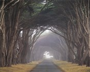 Corridor of Cypress