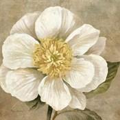 Up Close Cream Rose