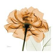Copper Rose White Leaves