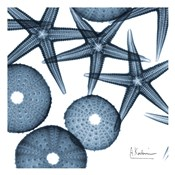 Starfish Trip 3