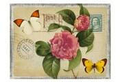 Vintage Butterfly Postcard I