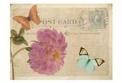 Vintage Butterfly Postcard IV