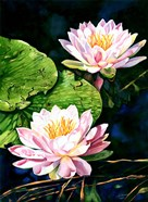 Waterlily Reflections