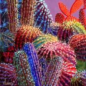 Barrel Cactus 4
