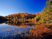 Pond in the Chaquamegon National Forest, Cable, Wisconsin
