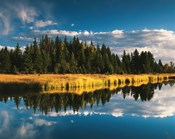 Trees reflecting in Snake River, Grand Teton National Park, Wyoming