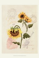 Romantic Sunflower I