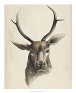Watercolor Animal Study I