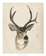 Watercolor Animal Study II