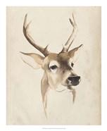 Watercolor Animal Study IV