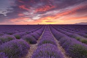 Sunrise over Lavender