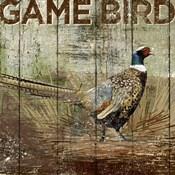 Open Season Pheasant