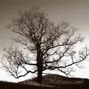 Oak Hillside