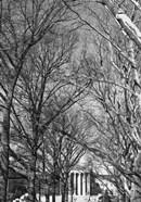 Philadelphia Museum (Trees)