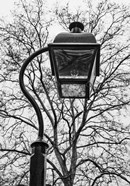 Lamp and branches