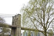 Brooklyn Bridge and Willow