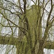 Veiled Brooklyn Bridge (detail)