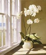 Pot Of Orchids