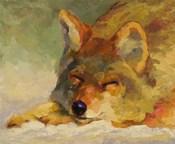 Chillin Coyote