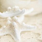 Seashore Stars