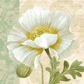 Pastel Poppies III