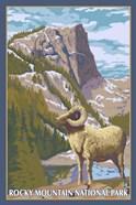 Rocky Mountain Park Ram