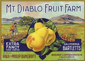 Mt. Diablo Fruit Farm Bartletts