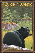 Lake Tahoe Bear