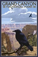 Grand Canyon National Park (crow)