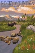 Rocky Mountain Park Moose